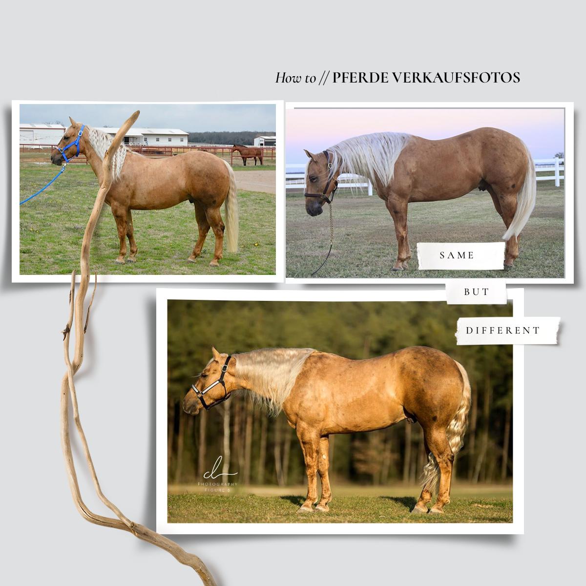 Pferde richtig aufstellen FIGURE 8